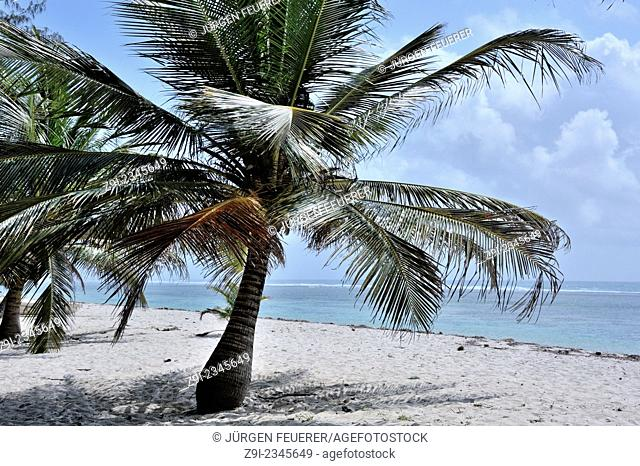 Wonderful places at the Indian Ocean with sandy beach and palms, Mombasa, Kenya