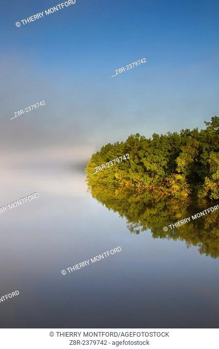 Sunrise on the Mahury. Mangroves. French Guiana