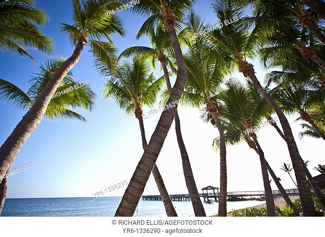 Coconut palms along the beach in Key West, Florida
