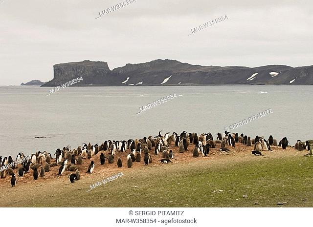 Antarctica, South Shetlands Islands, Aitcho Island, Chinstrap and Gentoo Penguins