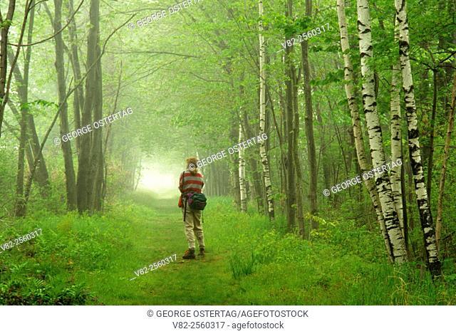 Birch-lined rail trail, Bashakill Wildlife Management Area, New York
