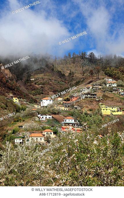 blossoming season at Jardim da Serra, Madeira, Portugal, Europe