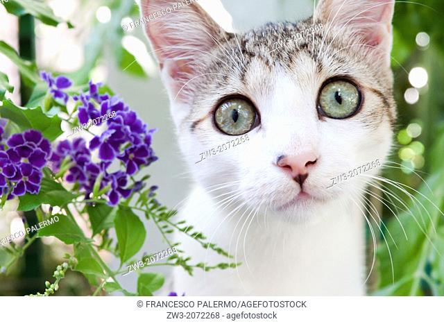 Close up on lovely small kitten with plants background. Canosa DP, Italy