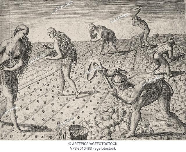 Theodor de Bry - native americans using fishbone hoe to plant maize and beans in florida
