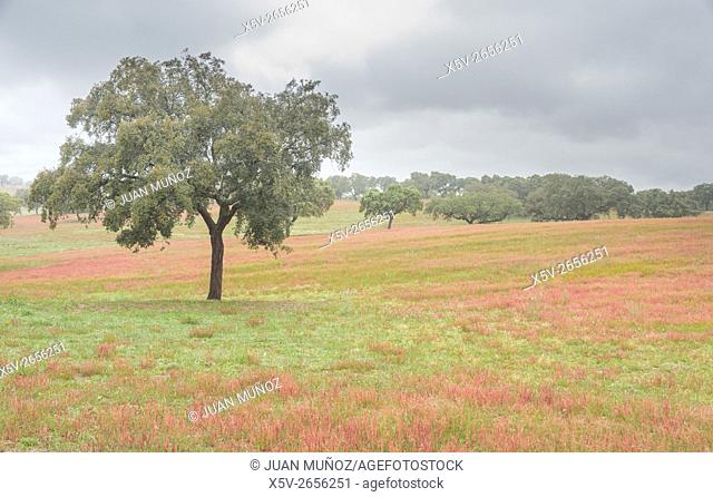 Spring landscape. Flowers and trees. District of Beja. Portugal
