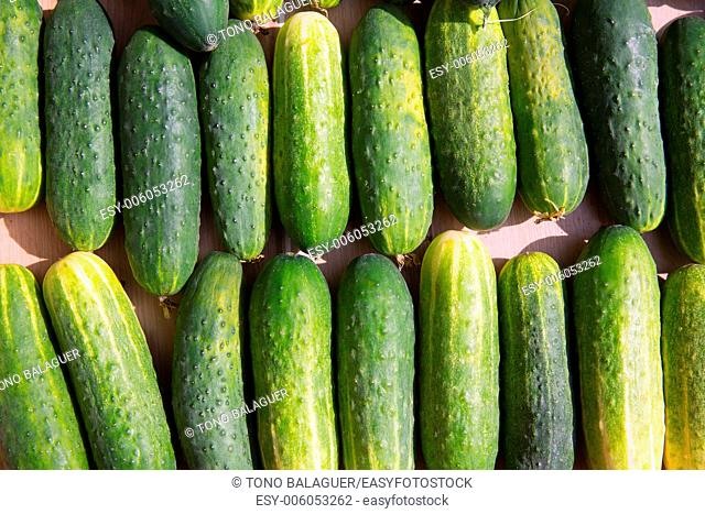 Cucumbers in a row at the market place outdoor in Mediterranean