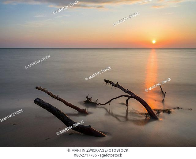 The Weststrand (western beach) on the Darss Peninsula. The beach and the coastal forest is eroded by storms. Western Pomerania Lagoon Area NP
