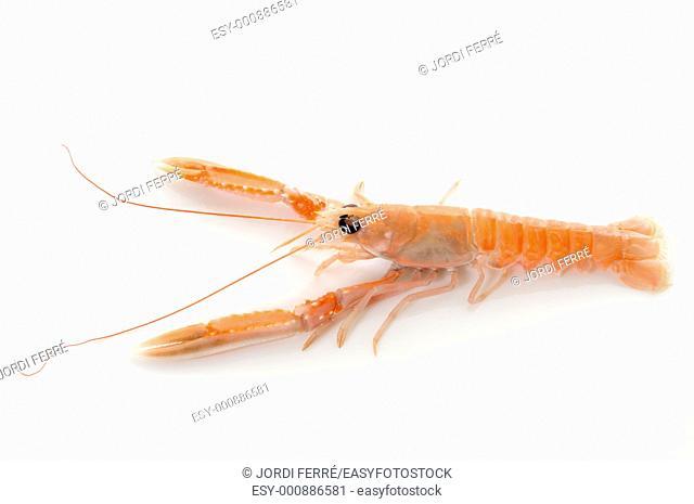 fresh prawns on white background