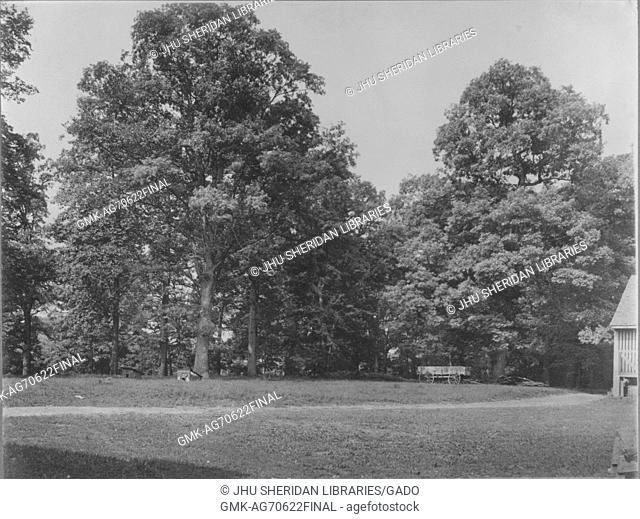 Landscape shot of a grassy area with tall trees, the corner of a house depicted in the right of the photograph, Roland Park/Guilford, United States, 1910