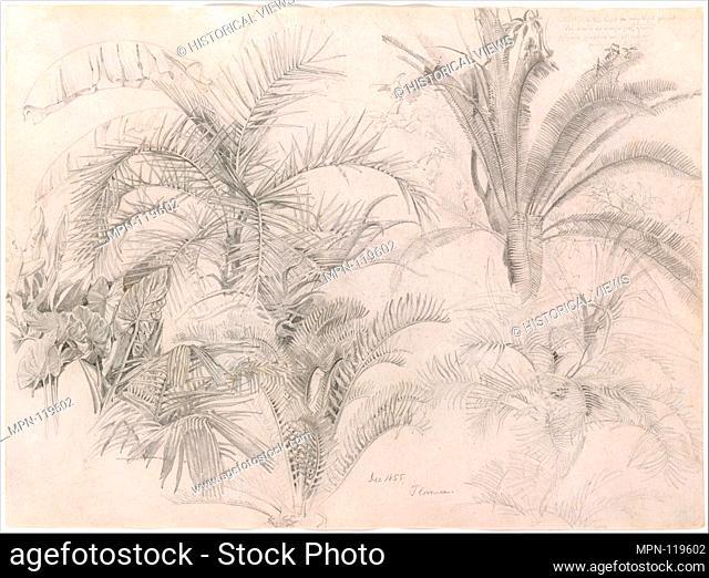 Palms. Artist: William Trost Richards (American, Philadelphia, Pennsylvania 1833-1905 Newport, Rhode Island); Date: 1855; Medium: Graphite on off-white wove...