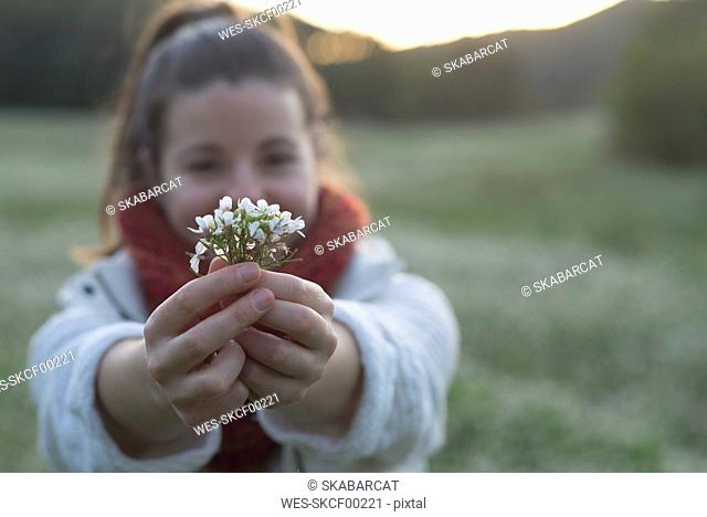 Hands of woman in nature holding white blossoms, close-up