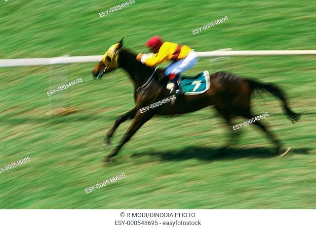 Horse Racing , Mahalaxmi , Bombay Mumbai , Maharashtra , India