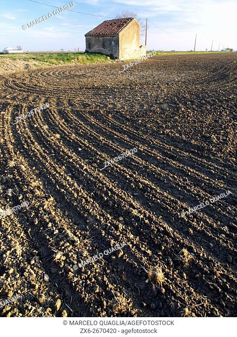 Ploughed rice fields and hut. Ebro River Delta Natural Park, Tarragona province, Catalonia, Spain