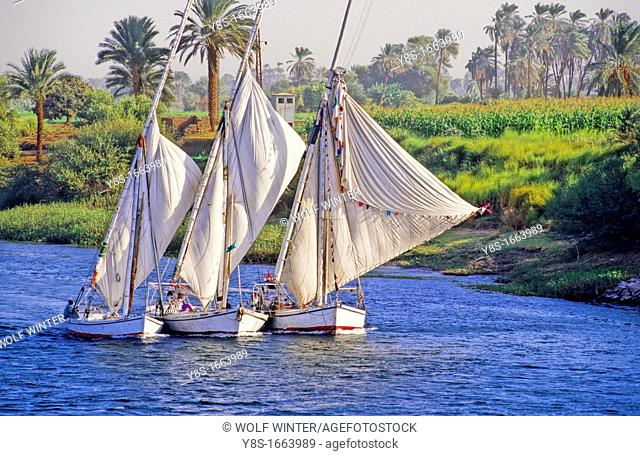 Feluccas sailing up the river Nile