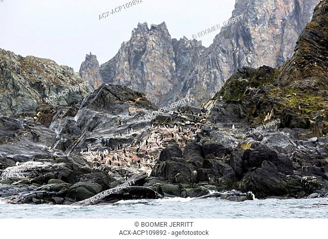 Chinstrap Penguins relax on a rocky headland on remote and inhospitable Elephant Island, South Shetland Islands
