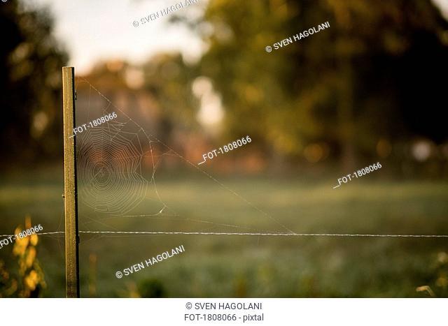 Spider web on rural fence