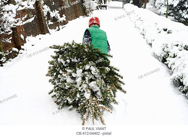 Boy dragging Christmas tree down street