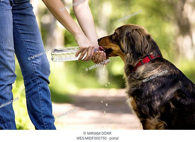 Woman giving her dog water to drink