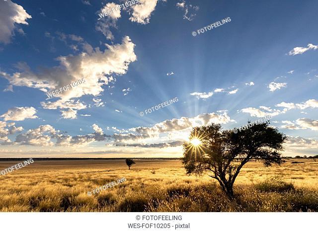 Africa, Botswana, Kgalagadi Transfrontier Park, Mabuasehube Game Reserve, Mabuasehube Pan at sunrise