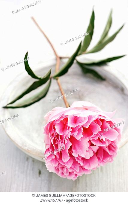 Peony flower with wooden bowl
