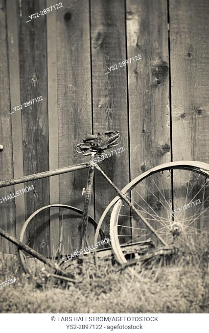 Old broken vintage bicycle and wooden wall. Rural still life