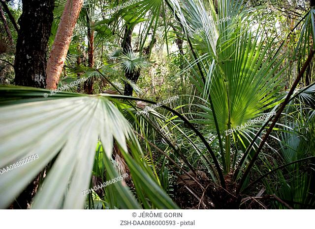 Tropical plants growing in Everglades National Park, Florida, USA