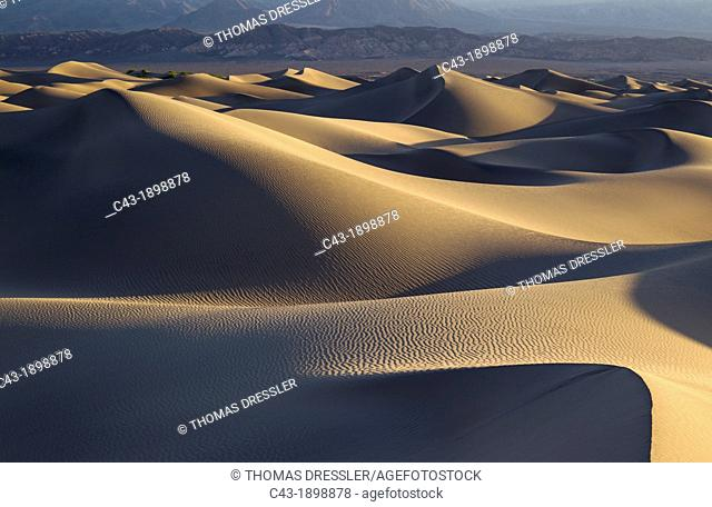 Mesquite Flat Sand Dunes and the foothills of the Amargosa Range in the Death Valley in the early morning  Death Valley National Park, California, USA