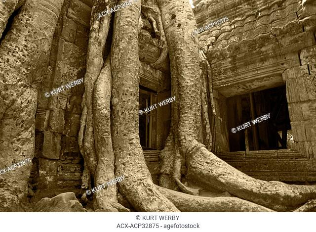 Centries old trees engulf the Temples at Ta Prohm at the Temples of Angkor near Siem Reap, Cambodia