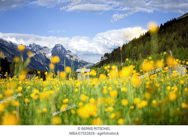 Flower meadow in the Stanzer Tal (Stanz Valley) near Sankt Anton, Tyrol, Austria