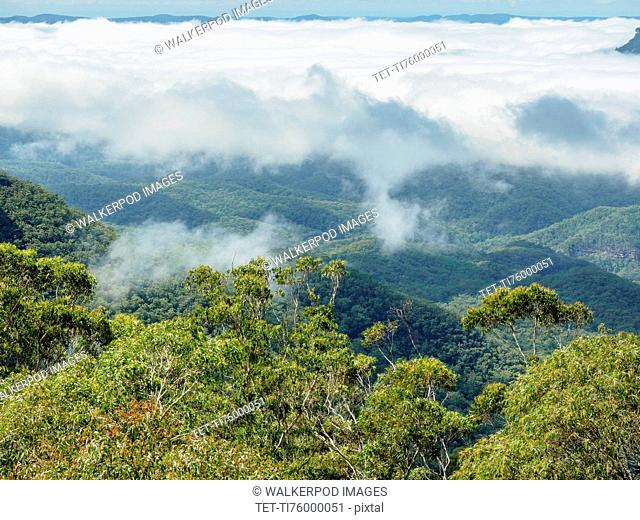Elevated view of forest in fog