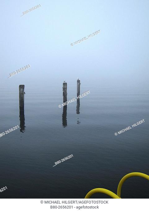 Weather, fog, Kiel's Firth, Kiel, Germany, Europe