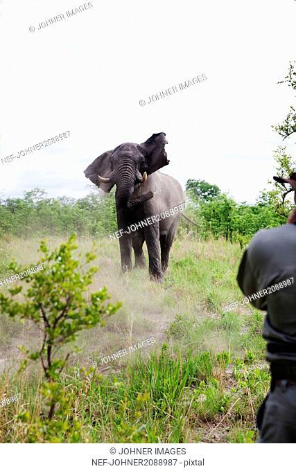 Elephant, man on foreground
