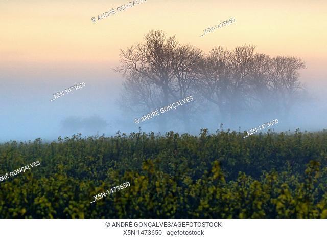 Mystic Trees, England