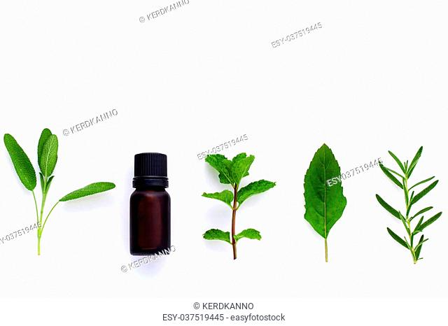 Bottle of essential oil with herb holy basil leaf, rosemary,oregano, sage,basil and mint on white background