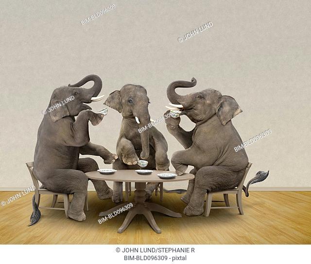 Elephants having tea party