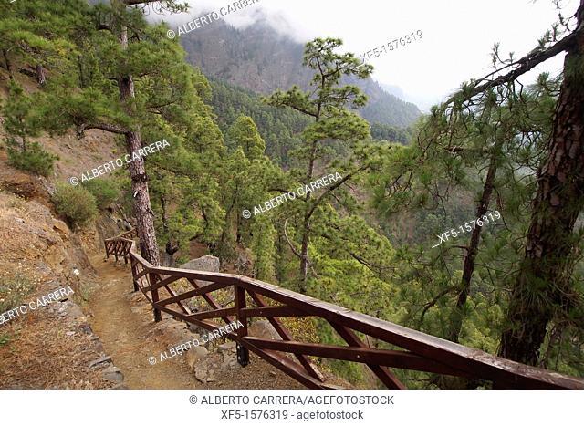 Footpath to La Cumbrecita, La Cumbrecita, Caldera de Taburiente National Park, Biosphere Reserve, ZEPA, LIC, La Palma, Canary Islands, Spain, Europe