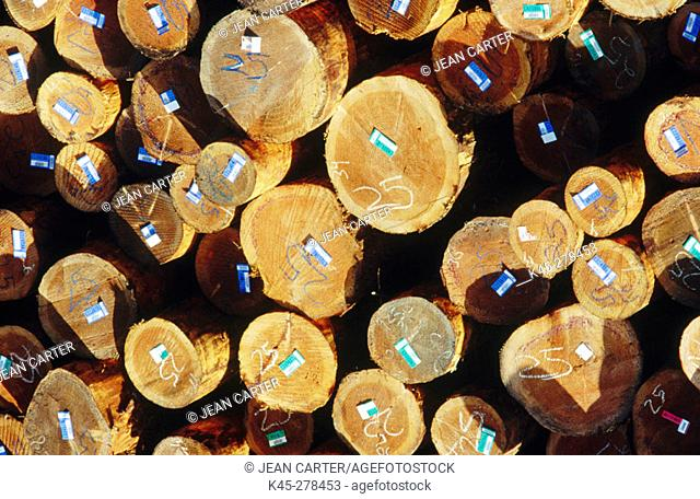 Douglas fir logs in cold deck. Coos Bay. Southern Oregon Coast. USA