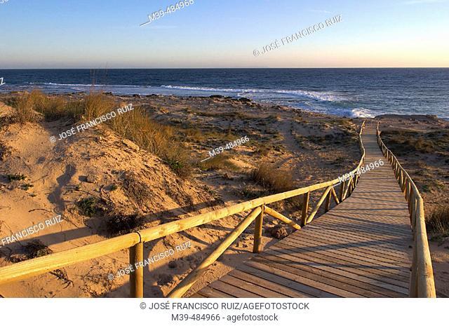 Trafalgar Cape, beach of Caños de Meca. Cádiz province, Andalusia, Spain
