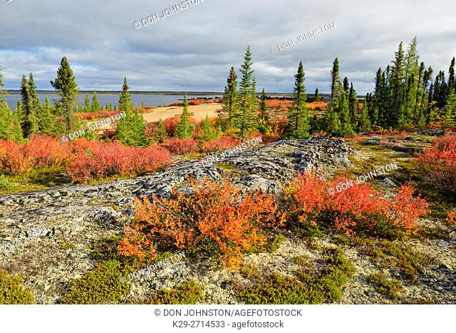 Barrenground autumn vegetation, Arctic Haven Lodge, Ennadai Lake, Nunavut, Canada