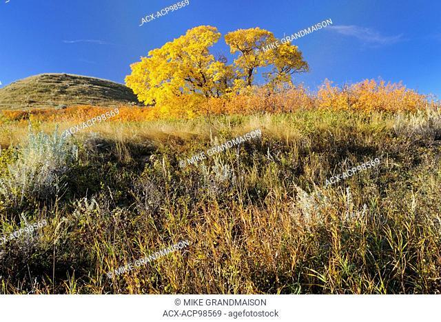 Hills in autumn Saskatchewan Landing Provincial Park Saskatchewan Canada