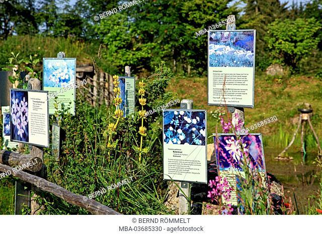 Germany, Bavaria, Allgäu, upper Allgäu, Allgäuer alps, Nagelfluhkette, Hörmoos, herbal alp, herb garden