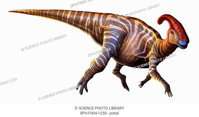 Parasaurolophus 'near-crested lizard', first described in 1922, was a dinosaur that lived at the end of the Cretaceous period, around 70 million years ago