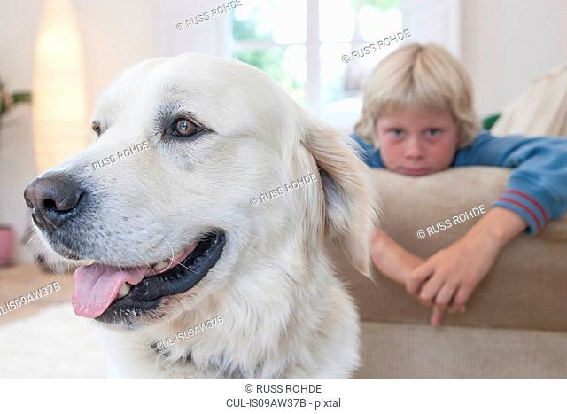 Close-up of pet dog, boy leaning on couch in background