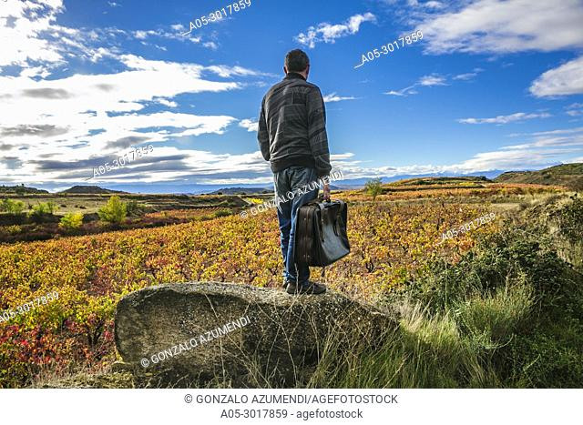 Vineyards in Autumn. In the background, Briones village. La Rioja. Spain