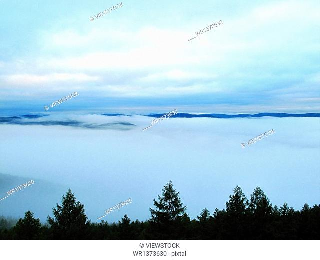 Daxinganling forest mist