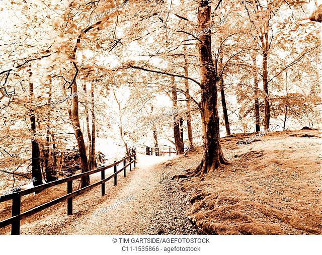 small wood autumn,Lake District, England, UK