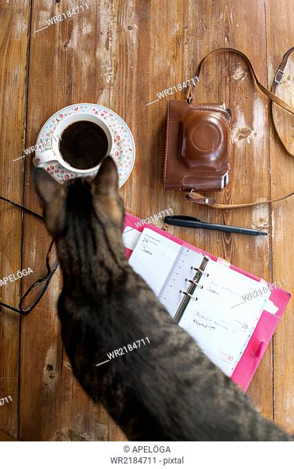 Directly above shot of cat by open diary, glasses, coffee, pen and camera on wooden table