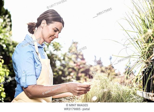 Young Caucasian woman employee of a garden centre nursery