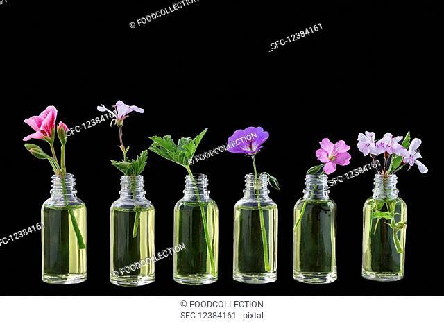 Various healing flowers in small oil bottles