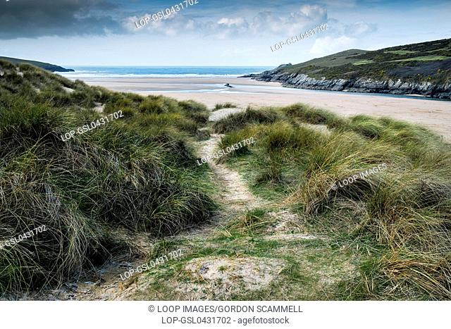 Marram grass growing on sand dunes overlooking Crantock Beach in Newquay